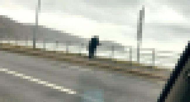 ウトロ 海岸 クマに関連した画像-01