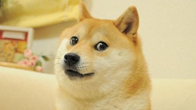 柴犬ポーチ ダッシュボード HUDに関連した画像-01