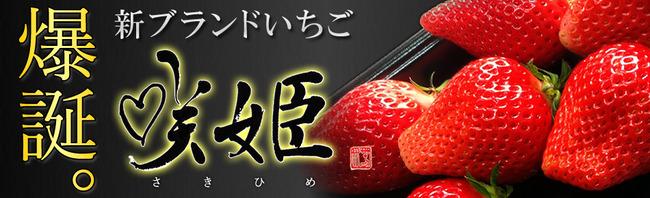 TOKIO イチゴ農家 イチゴ 見よう見まね 品種改良 成功 大ヒット 咲姫に関連した画像-06