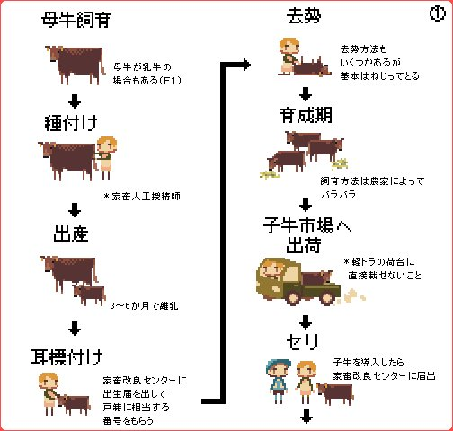 牛肉 牛 飼育 フローに関連した画像-02
