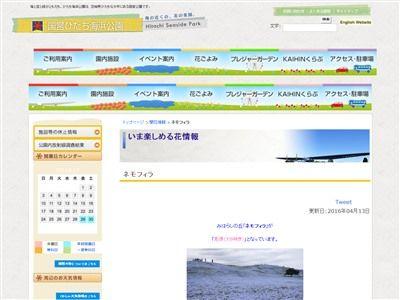 国営ひたち海浜公園 ネモフィラ 花畑 幻想に関連した画像-06