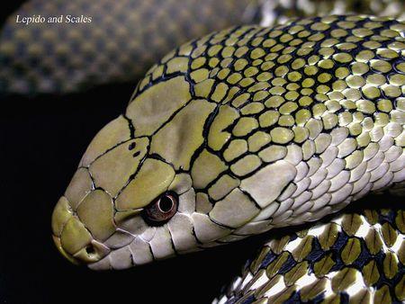 ヘビ コブラ 自殺に関連した画像-01