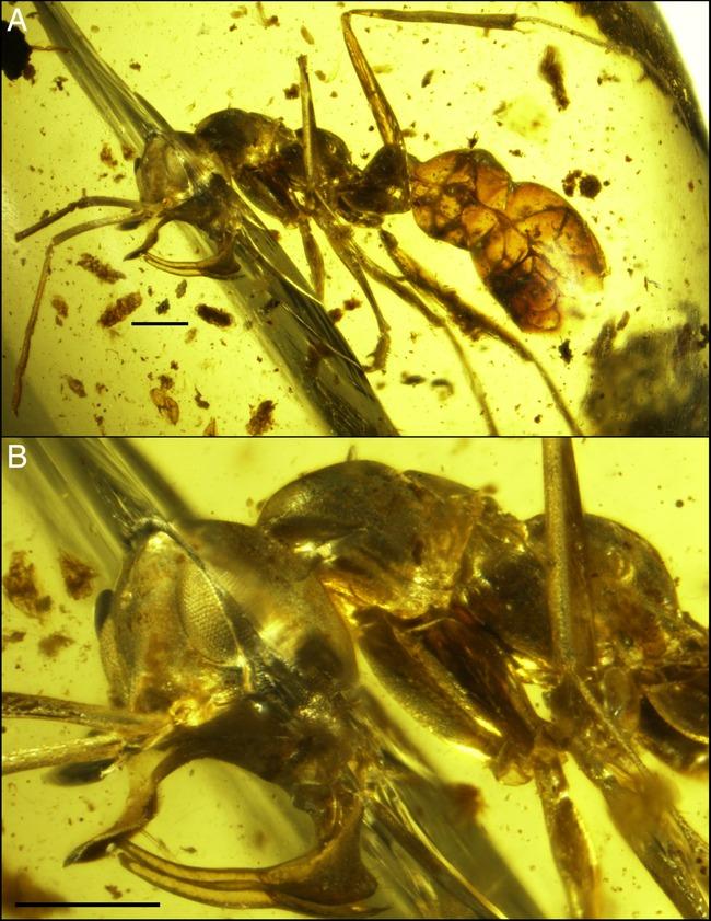 アリ 蟻 アイアント 新種 金属に関連した画像-02