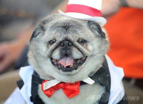 世界一醜い犬コンテストに関連した画像-09