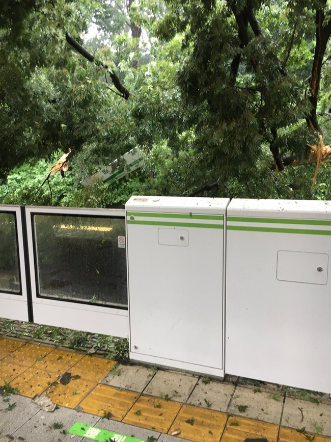 原宿駅 倒木 駅 木 山手線 台風に関連した画像-06