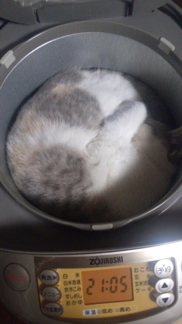 猫に関連した画像-01
