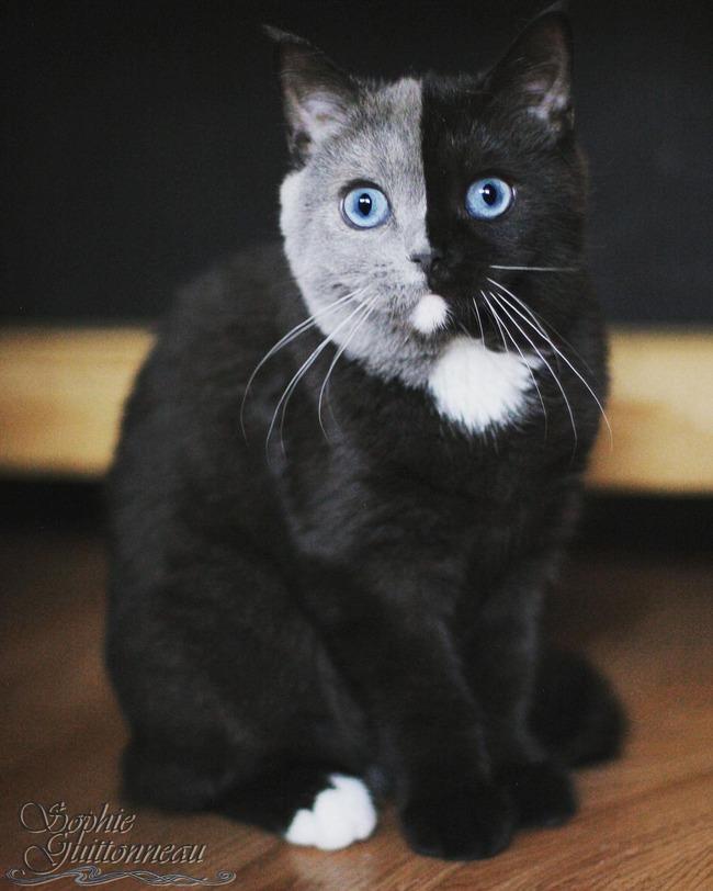 猫 グレー 黒に関連した画像-02