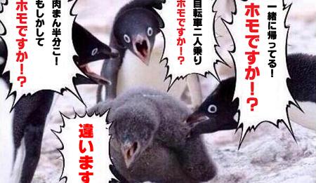 ペンギンに関連した画像-01