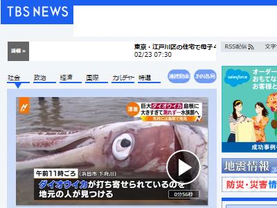ダイオウイカ 島根県 水族館 漂着に関連した画像-02