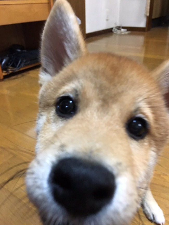 ポプテピピック 犬 10話 写真 スタッフに関連した画像-05