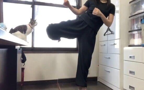 蹴り解説動画 猫乱入 癒やしに関連した画像-01