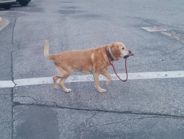 犬に関連した画像-02