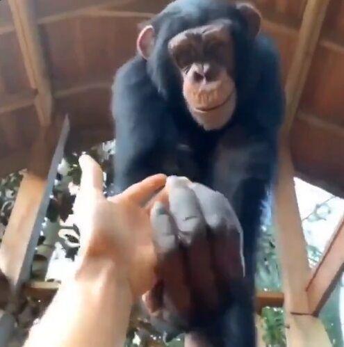 猿 人間 信頼関係に関連した画像-06