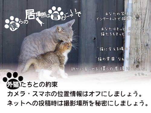 猫 不幸な猫 SNSに関連した画像-05