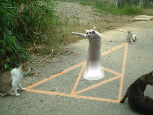 のびーるたん 猫 現在 寿命 長いに関連した画像-04