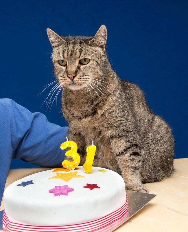 猫 ネコ 最長寿 脳卒中に関連した画像-02