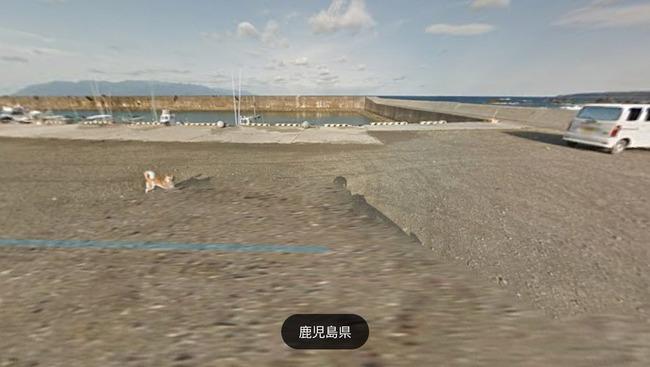 グーグル google ストリートビュー 犬 イッヌに関連した画像-07