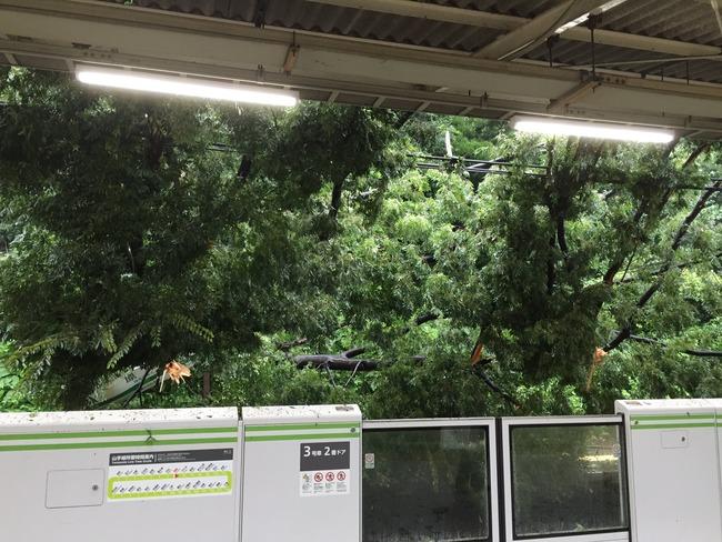 原宿駅 倒木 駅 木 山手線 台風に関連した画像-04