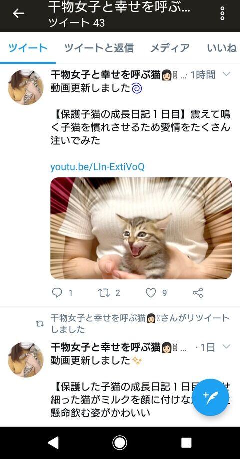 動物 YouTuber 猫 自演に関連した画像-07