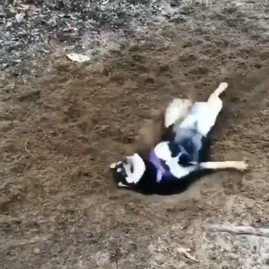 犬 穴掘り テンションに関連した画像-05