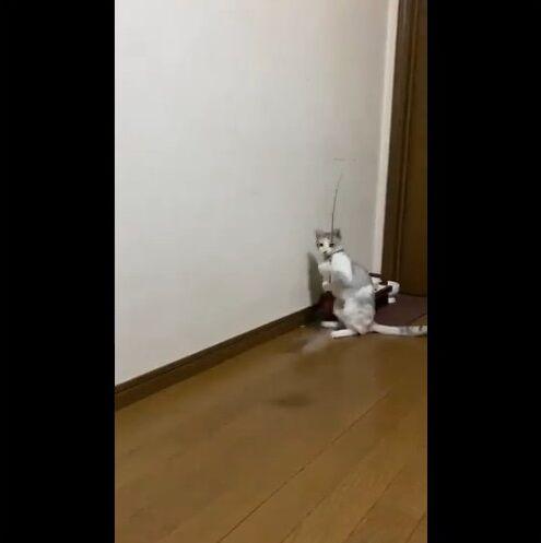 猫 猫じゃらし 一人遊びに関連した画像-04