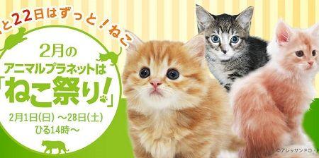 アニマルプラネット 猫 ねこタクシーに関連した画像-01