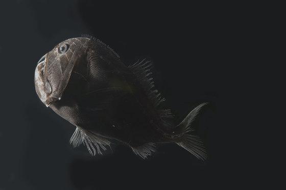 世界一黒い魚米研究者発見に関連した画像-04