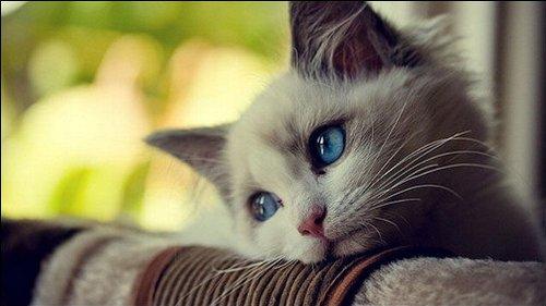 猫 殺害 理想 動物愛護法違反に関連した画像-01