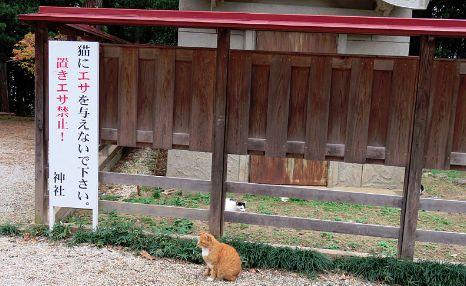 猫 ネコ 神社 猫神社に関連した画像-01