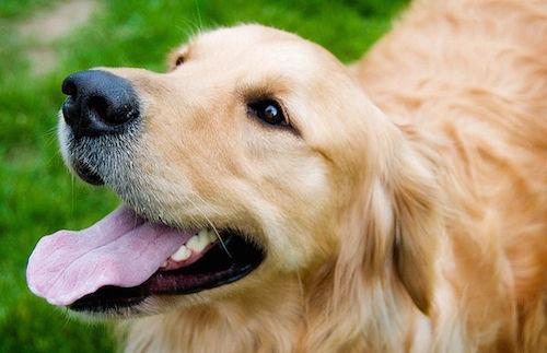 犬 放置 返還 裁判に関連した画像-01
