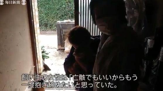 台風19号 猫 行方不明 再開 動画に関連した画像-09