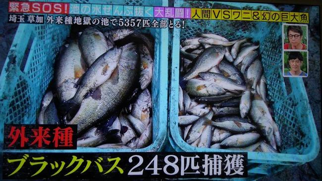 池の水ぜんぶ抜く 茨城 潮来市 用水路 ブラックバス 愛好家 講義に関連した画像-01