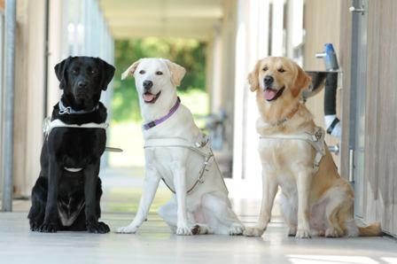 盲導犬 パートナー 埼玉 和光 蹴りに関連した画像-01