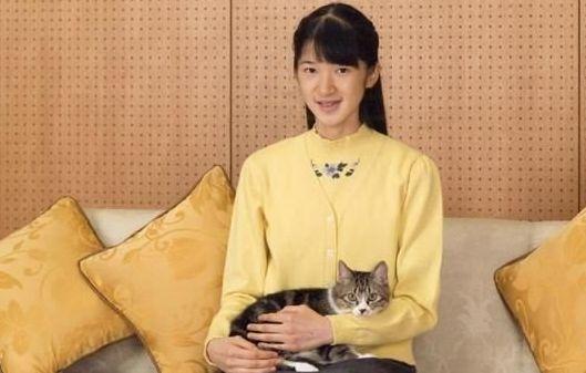 愛子様 ニンゲン ネコに関連した画像-01
