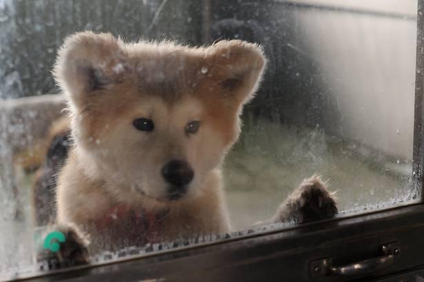 犬 図書館 母親に関連した画像-01