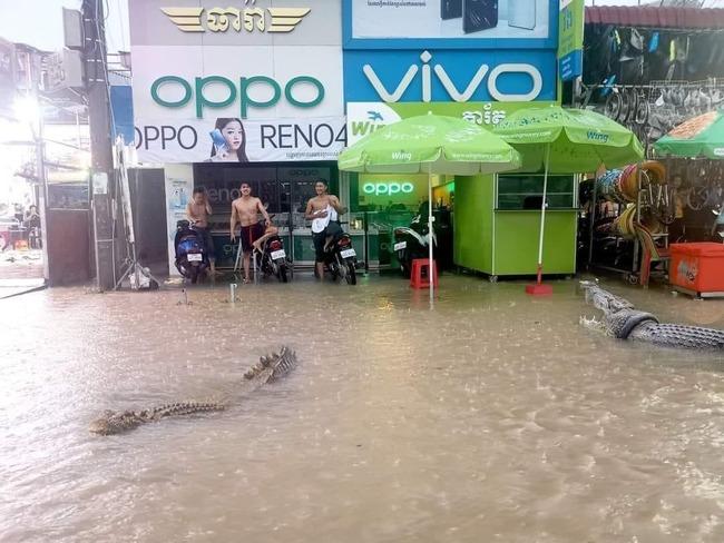 カンボジア人 強メンタル 洪水 ワニに関連した画像-03