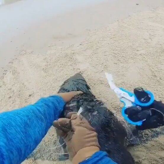 オットセイ 漁網 切断 NGO団体 紳士 優しい世界に関連した画像-06