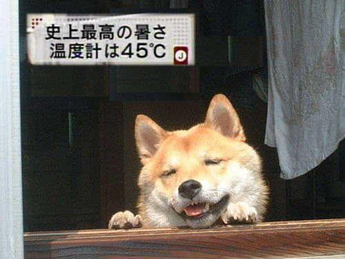 犬 猛暑 散歩に関連した画像-01