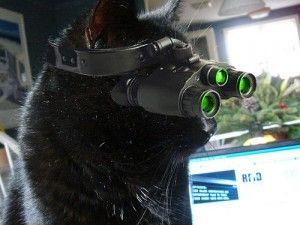 CIA 猫 スパイに関連した画像-01