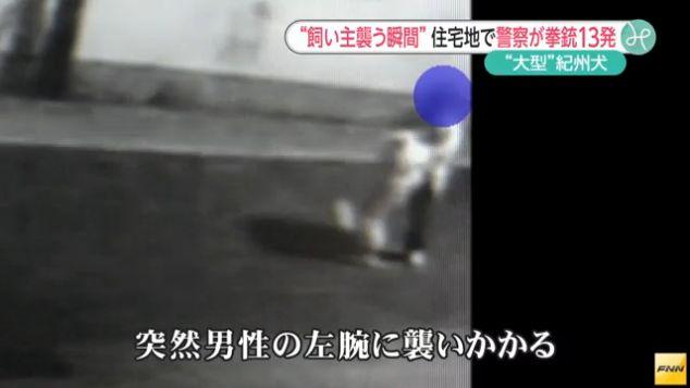 犬 発砲に関連した画像-01