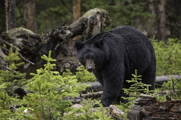 クマ 一緒 森 迷子 ノースカロライナ州 奇跡に関連した画像-01