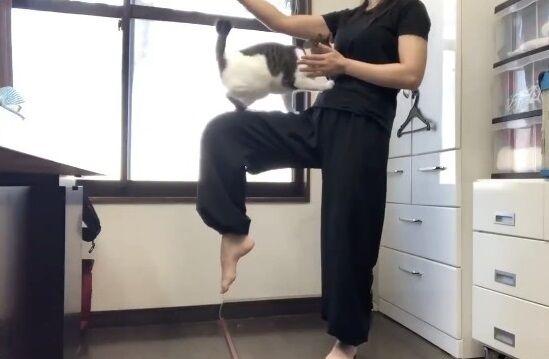 蹴り解説動画 猫乱入 癒やしに関連した画像-08