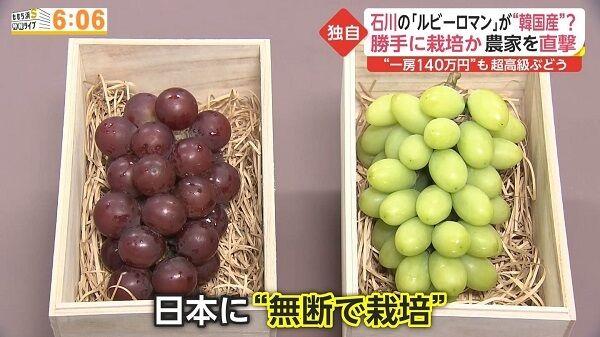 韓国 シャインマスカット パクリ 品種登録に関連した画像-01