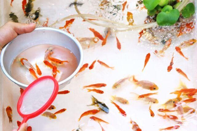 金魚すくい 関西外国語大学 合格に関連した画像-01