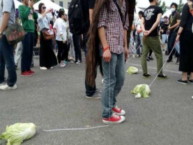 ヴィーガン 菜食主義者 キャベツ 白菜 散歩に関連した画像-03