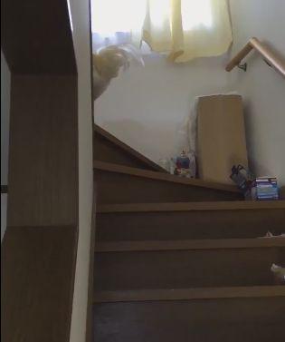 ニワトリ 息子 起こす 階段に関連した画像-04