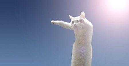 猫 のびーるたん コラ画像 長い long cat is longに関連した画像-01