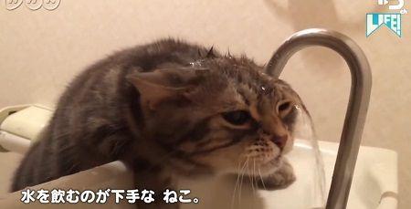 NHK ムロツヨシ 猫 LIFE コント 癒し動画に関連した画像-01