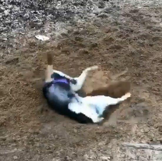 犬 穴掘り テンションに関連した画像-06