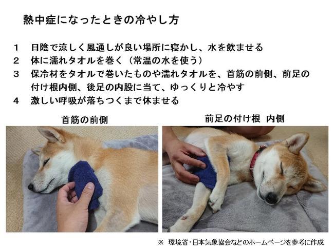 熱中症 ペット 犬 猫 体温調整に関連した画像-03